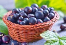 Черная смородина Пигмей: описание сорта, агротехника
