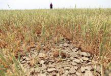 Джамбулат Хатуов оценил масштабы засухи на Кубани