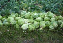 Фермерскую площадку для обмена ресурсами создают на Ставрополье