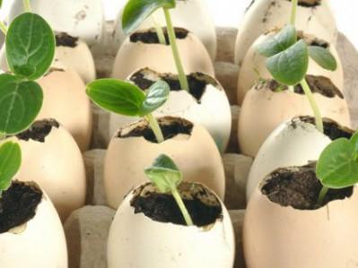 Яичная скорлупа — удобрение для цветов и огорода