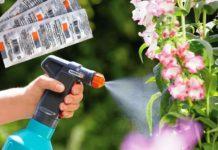 Янтарная кислота: полив комнатных цветов для удобрения почвы