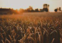 Как открыть сельскохозяйственное предприятие