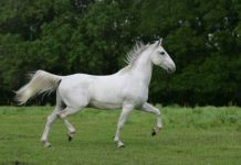 Классификация пород лошадей