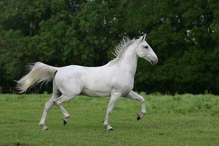 Photo of Классификация пород лошадей