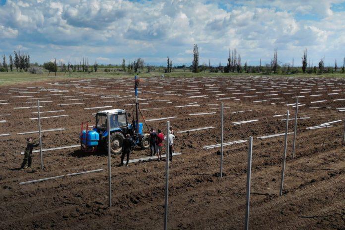 Крымский федеральный университет закладывает суперинтенсивный яблоневый сад