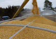Минсельхоз РФ дал прогноз по экспорту продукции агропромышленного комплекса