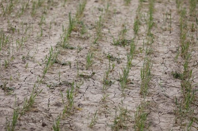 На Ставрополье для борьбы с засухой вызовут искусственные осадки