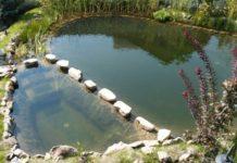 Организация водослива для искусственного водоема при содержании раков