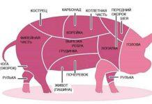 Правила забоя свиньи и переработка свинины