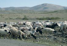 Проект «Новая жизнь»: бывшим заключённым в Туве начнут раздавать скот