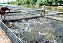 Производство продукции аквакультуры увеличилось на 38%