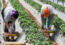 Сельское хозяйство Польши ждёт катастрофа безмигрантов сУкраины— эксперт