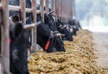 Семейные фермы в Башкирии смогут получить грант до 30 миллионов рублей