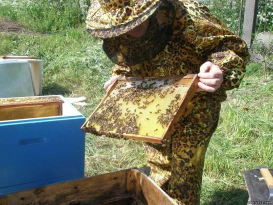 Сколько стоит улей с пчелами