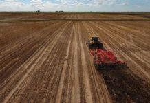 Сотни сельхозтоваропроизводителей Кузбасса получили «погектарную» поддержку
