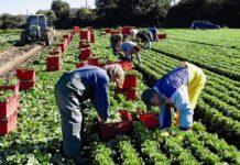 Talouselämä (Финляндия): запрет навыезд украинской рабочей силы вФинляндию усугубит кризис финского сельского хозяйства