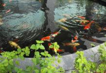 Устройство прудов для выращивания пищевой рыбы