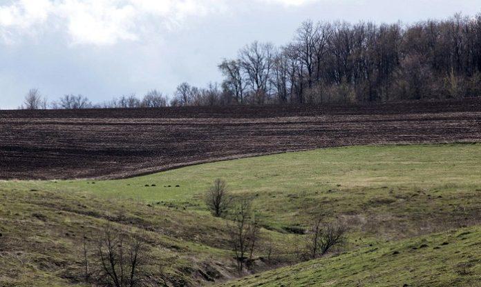 В Ленобласти между аграриями распределят 87 участков земли и 24 млн рублей