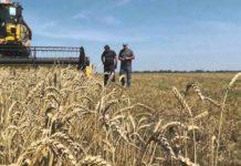 В Новосибирской области расширят господдержку сельского хозяйства