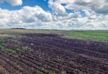 В Рязанской области пыльные бури уничтожили часть посевов свёклы и рапса