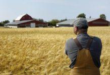 Власти США выделят $19 млрд на помощь фермерам