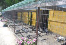 Вольеры для фазанов