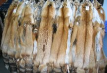 Выделка шкуры лисы