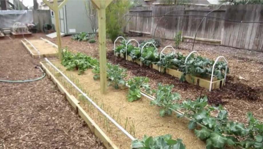 Выращивание овощей по методу Митлайдера