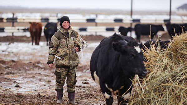 Бывшие заключенные станут фермерами – в Тыве начался необычный проект