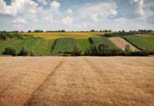 Депутаты предложили уточнить компетенцию Росреестра по административным делам в отношении сельхозземель