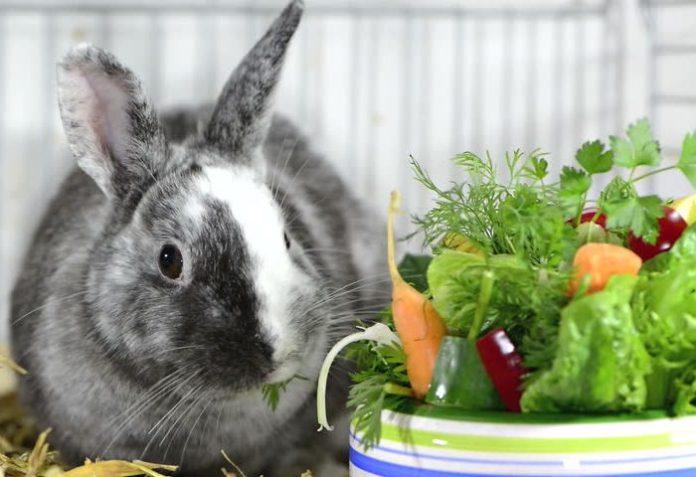 Физиологические основы рационального кормления кроликов