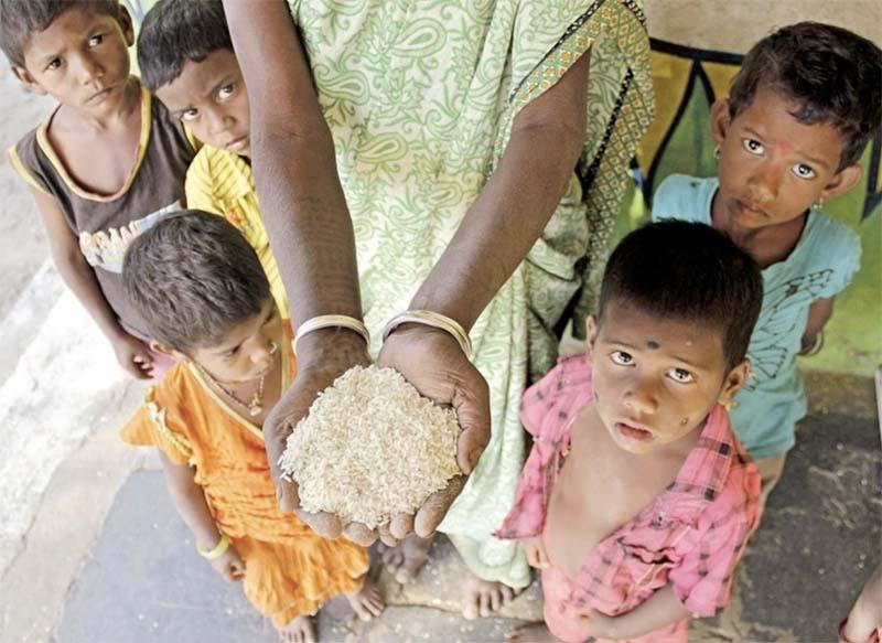 Глобальный продовольственный кризис будет или нет