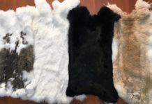 Как покрасить шкурку кролика в черный цвет