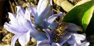 Какие бывают осы