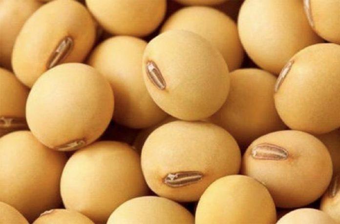 Китай разрешил импорт двух сортов генномодифицированной сои