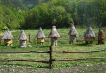 Колодное пчеловодство методика эффективность преимущества