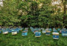 Недобросовестность тульских аграриев привела к гибели пчел
