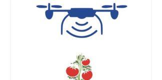 Новая технология разработанная учеными Университета Флориды позволяет дистанционно диагностировать бактериальную пятнистость и коринеспороз томатов