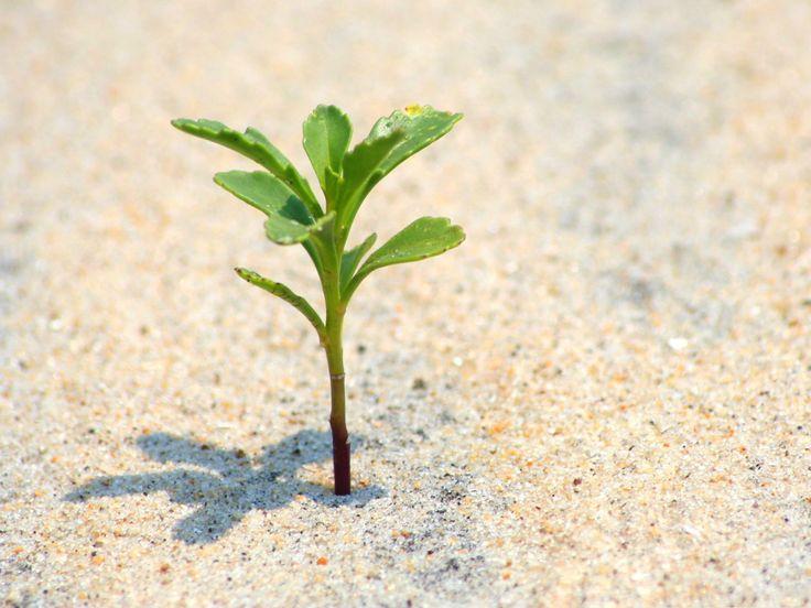 Основные факторы жизни растений