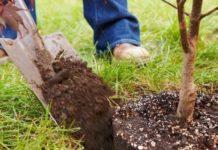 Перемещение деревьев и кустарников