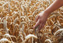 Потери урожая сельхозпредприятий Краснодара могут составить до 30%