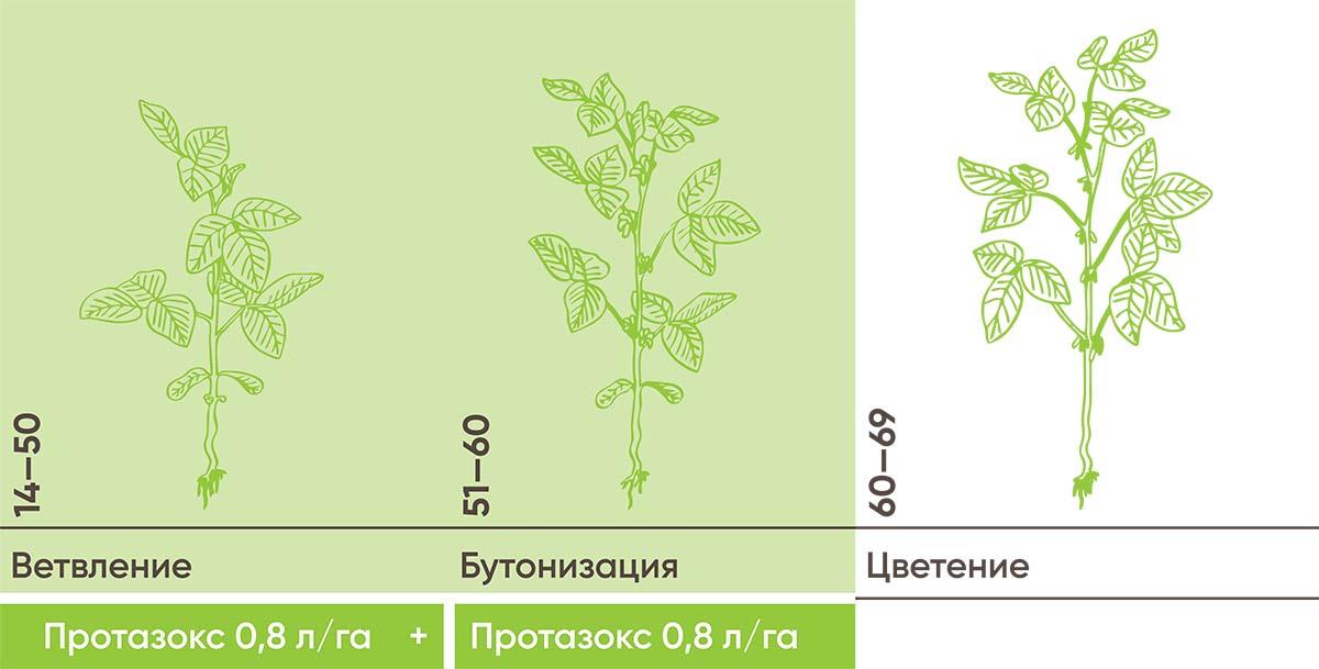 Рис. 12. Интенсивная защита сои на высоком фоне болезней