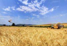 СовЭкон повышает прогноз российского урожая зерновых, американские аналитики против
