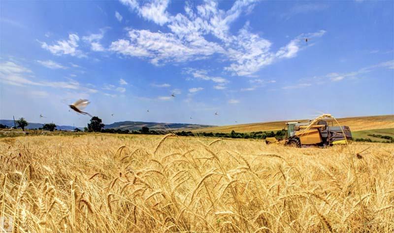Photo of СовЭкон повышает прогноз российского урожая зерновых, американские аналитики против