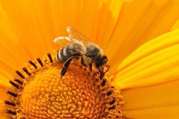 В Госдуму внесён законопроект о развитии пчеловодства