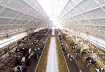 В Якутии в ближайшее время появятся новые животноводческие комплексы