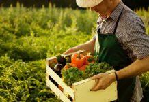 ВМосковской области фермерам разрешат торговать савтолавок