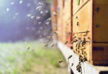 В Подмосковье скоро появится первый племенной репродуктор по разведению пчел