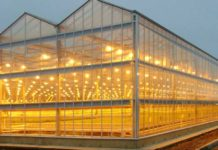 В Подмосковье создают инновационную систему выращивания овощей в теплицах