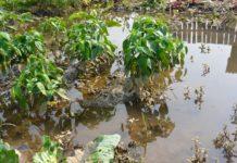 В сельском хозяйстве Приморья сложилась наиболее тяжелая ситуация
